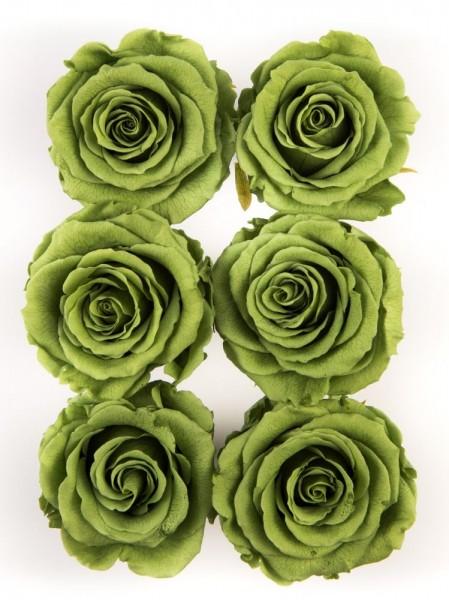 Wonderful Six Green