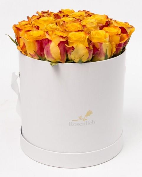 Medi Bellissima - 20 Naturale Rosen
