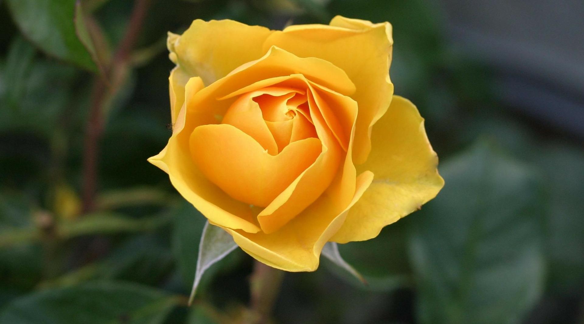 Was bedeutet das gelbe herz