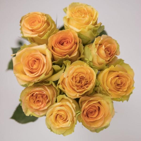 20x Short handled Rose Orange