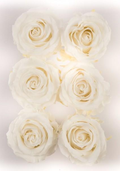 Wonderful Six Weiß