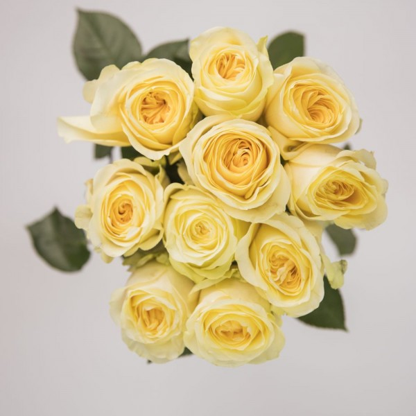 30x Short handled Rose Yellow