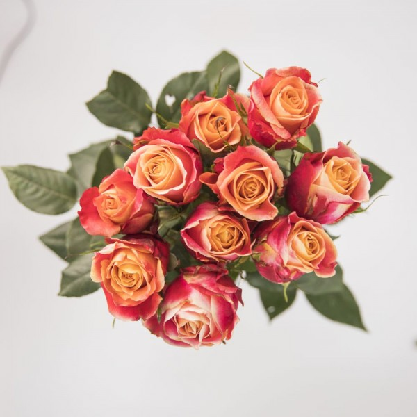 20x Long handled Rose Fire Red