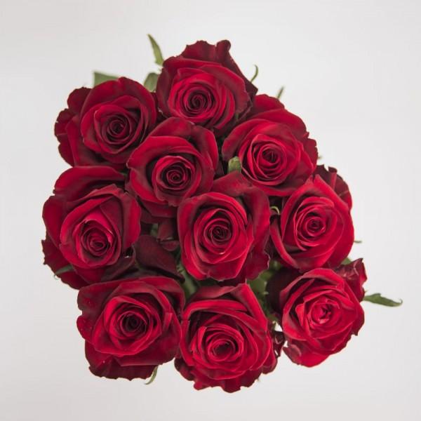 20x Kinge Size Rose Red